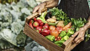 del productor a la mesavida sana laura tabernise nutrición holística