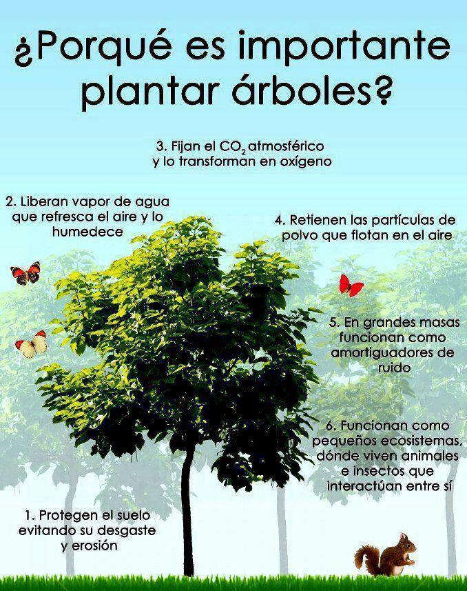 El d a del rbol se celebra el 29 de agosto en argentina for Como crecen los arboles para ninos
